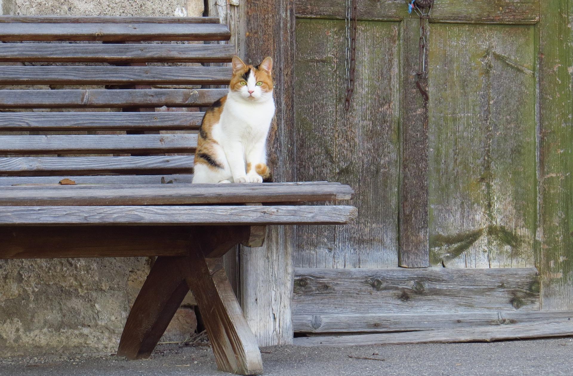 katze mag nicht mehr durch katzenklappe